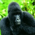 10day-uganda-nature-safari