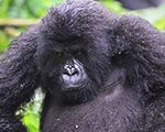 3-days-bwindi-safari