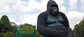 4-days-gorilla-safari