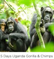 5-days-uganda-gorilla-chimps
