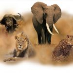 7day-uganda-nature-safari1