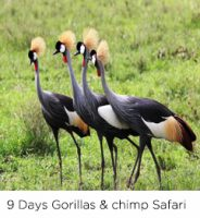 9-days-uganda-safari