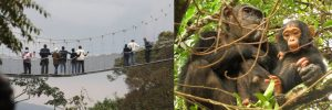 canopy-walk-and-chimp-tracking