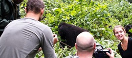 gorilla-tracking-experience