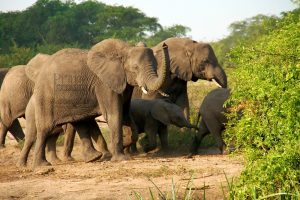 3 Days Uganda Flying Safari to Kidepo Valley National Park