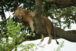 4 Days Queen Elizabeth national park safari Tours-Uganda Safaris