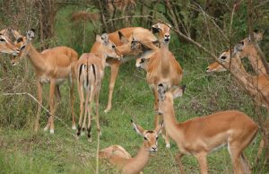 2 Days Uganda Wildlife Safari tour to Lake Mburo National Park