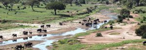 10 Days Combined Kenya Safari Tour & Tanzania Safari Holiday