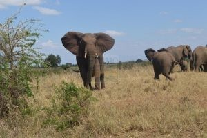 4 days Uganda Wildlife Safari Kidepo Valley National Park Tour