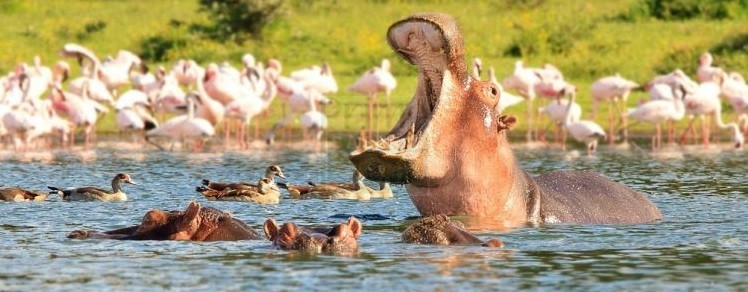 1 Day Kenya Tour to Lake Naivasha