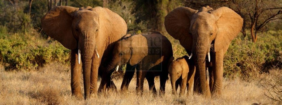 10 Days Classic Safari Kenya Adamsons Footsteps