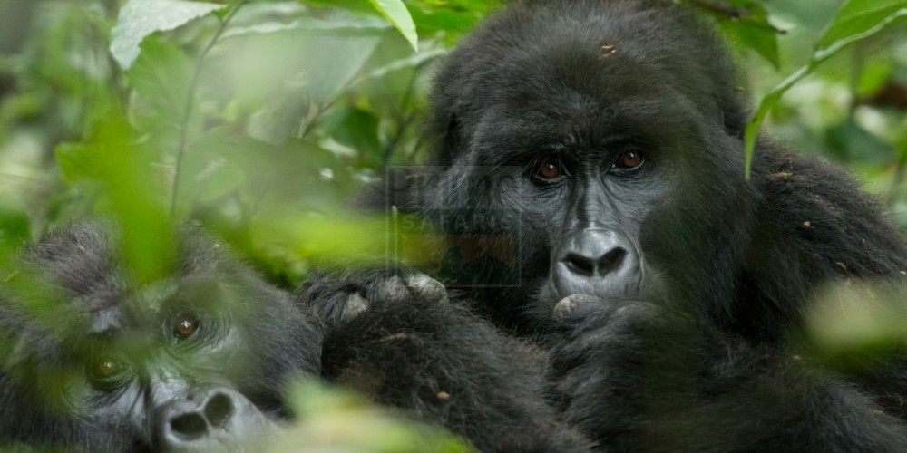 12 Days Uganda Rwanda Cycling Adventure Safari Tour