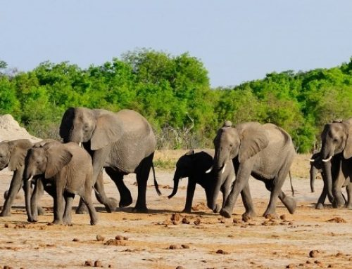 2 Days Kidepo Wildlife Safari Uganda Safari / 2 Days Uganda Wildlife Safari In Kidepo Valley Park- Uganda Safari News