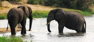 10 Days Uganda Gorilla Trekking Wildlife & Chimpanzee Tracking Safari Tour