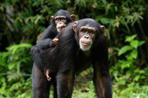 6 Days Uganda wildlife safari Queen