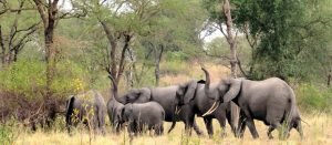 10 Days Combined Kenya Safari Tour & Tanzania Safari Holiday