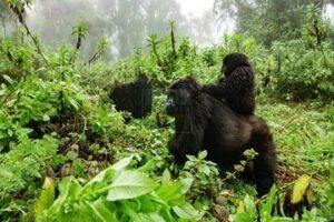 3 days Bwindi Gorilla Safari Tour