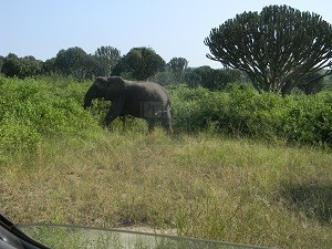 4 Days Bwindi Gorilla trekking Safari Uganda Wildlife Tour Lake Mburo