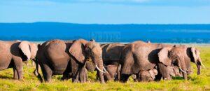 1 Day Amboseli National Park Safari Tour Kenya